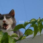 cyclades-paros-chat_12