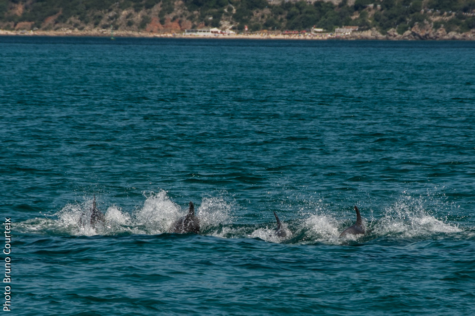 Rencontre avec les dauphins nice