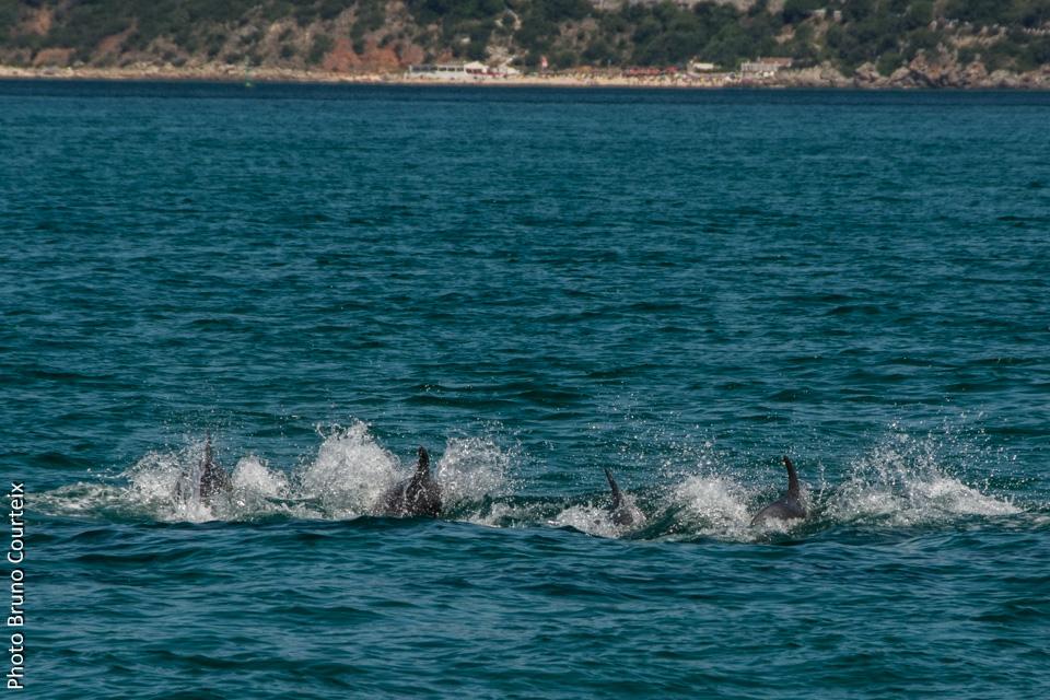 Video rencontre dauphin marineland